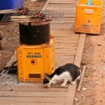 local_cat_eating_four_thousand_islands_laos