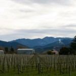 vinyards_blenheim