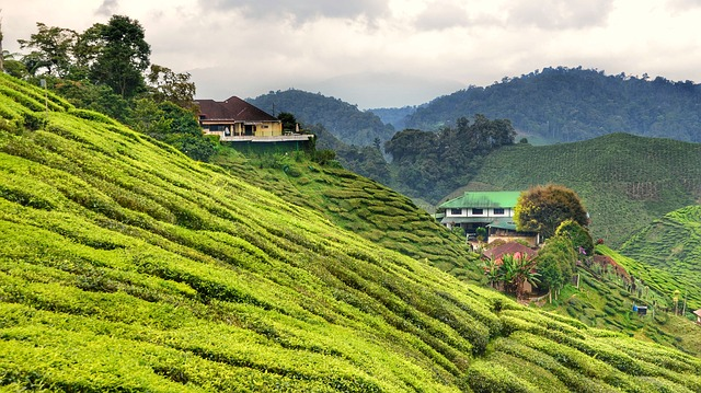 Places in Malaysia